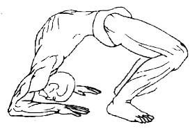«Ардха-чакрасана» («Урдхва-дханурасана»)