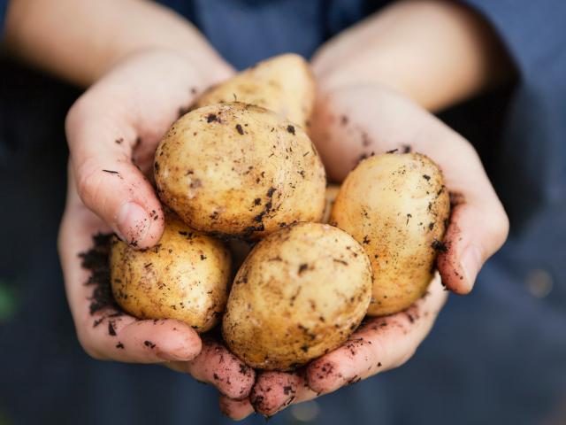 Картофель: 4 полезных свойства и 2 полезных рецепта